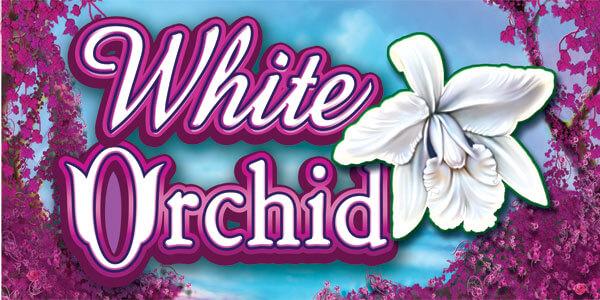 Trucos y secretos para ganar a la slot de White Orchid