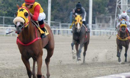¿Cómo ganar en las apuestas de caballos?